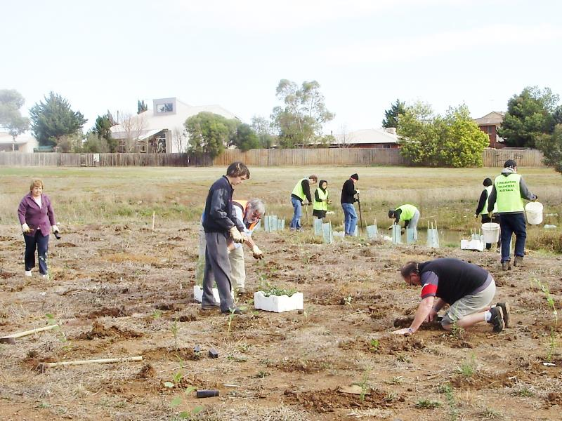 15 planting at Brkookfield July 2009.jpg