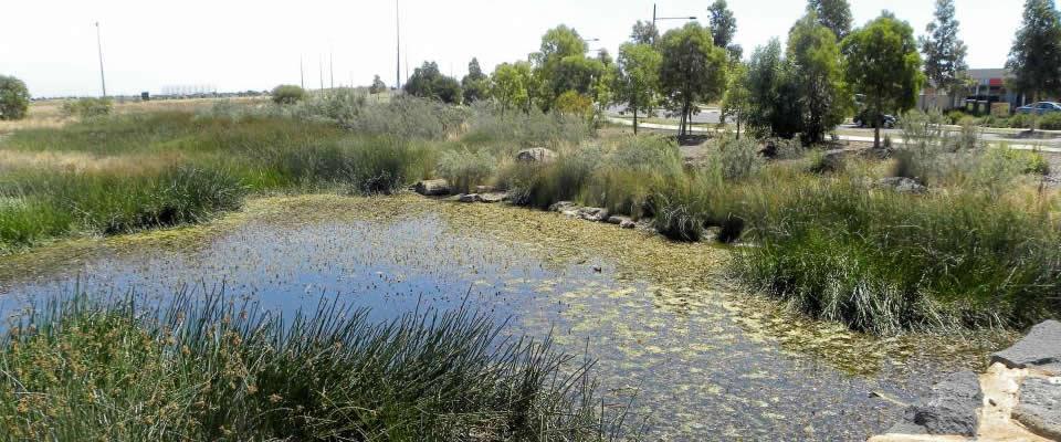 Manmade Wetland at Caroline Springs with GGF's