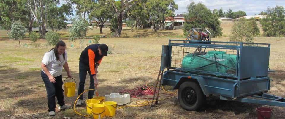 Watering at Brookfield (2 Feb 2013)